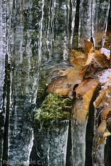 foglie nel ghiaccio, leaves in the ice (paolo.gislimberti) Tags: invernoghiacciofogliesecchestalattitidighiaccio winter ice deadleaves icystalactites