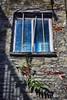 muurboompje (roberke) Tags: raam venster window muur wall old baksteen sun zon zonlicht zonnig detail plant outdoor green groen bladeren red rood schaduw shadow