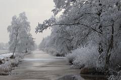 Winter (NLHank) Tags: caonon eos 7d eos7d nlhank winter rijp nederland netherlands holland wieden