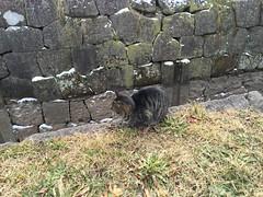 IMG_0815 Goryokaku - stray cat #1 (drayy) Tags: japan hokkaido hakodate goryokaku fortress samuraiwars meiji restoration thebiggestgroupwithonlycats ggg 五稜郭 城郭 日本 函館 北海道 旅行