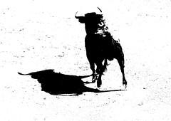 Mira que novillo ! (aficion2012) Tags: arles france francia novillada feria riz septembre 2016 corrida toros toreaux bull bullfight flight leo valadez blohorn jalabert novillo novillos manoletina