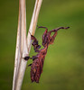Prometheus (Kathy Macpherson Baca) Tags: animal animals insect bug bugs insects mantis preying praying ghostmantis predator camoflauge enviorment nature wildlife endangered invertabrate macro world earth planet asia africa