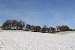 Wave of landscape (Xtraphoto) Tags: schnee snow winter bayern bavaria blue sky row baumreihe bäume trees hügel hügelland wave landscape landschaft