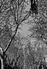 varios por madrid-10 (profesorxproyect) Tags: vallecas madrid bw byn blancoynegro blackandwhite bn streetphotography city ciudad callejera nikon d5100