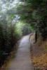 山中遊040 (kingston Tam) Tags: moss grass path hillside hiking field bigtree oddtree garden nature fujifilmxt1