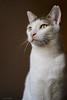 Grim (leporcia) Tags: animales animals animalplanet cat cats chat gatos gato gatto katze katzen kitty felino feline grim