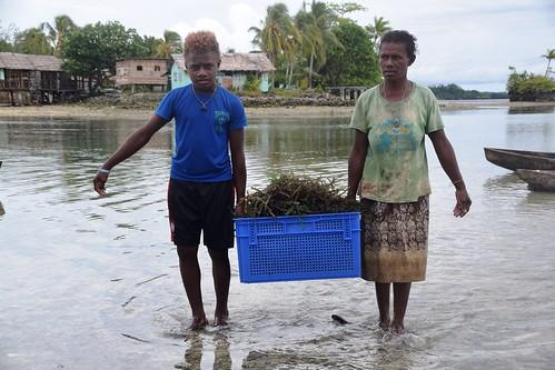 vanderploeg2016 Lau Lagoon (113) seaweed farming