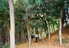 (Arianna Rubini) Tags: olympusmjuii olympus mjuii mju ii italy stylus epic 35mm film folk wanderlust woods wild walk wood summer summerends simple beauty trees mountains hills girl explore explorer kodak color plus 400