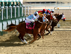 "2015-02-13 (39) r3 and they're off (JLeeFleenor) Tags: photos photography md marylandhorseracing marylandracing laurelpark gate jockey جُوكِي ""赛马骑师"" jinete ""競馬騎手"" dżokej jocheu คนขี่ม้าแข่ง jóquei žokej kilparatsastaja rennreiter fantino ""경마 기수"" жокей jokey người horses thoroughbreds equine equestrian cheval cavalo cavallo cavall caballo pferd paard perd hevonen hest hestur cal kon konj beygir capall ceffyl cuddy yarraman faras alogo soos kuda uma pfeerd koin حصان кон 马 häst άλογο סוס घोड़ा 馬 koń лошадь maryland"