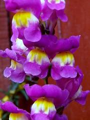 058 (diego.aranguiz) Tags: naturaleza macro de flor lila amarillo dreams campo unlimited profundidad macrounlimited