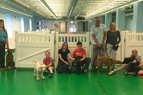 """Puppy Head Start, Session G, Spring 2015-Sat; Class photo • <a style=""""font-size:0.8em;"""" href=""""http://www.flickr.com/photos/65918608@N08/19486834861/"""" target=""""_blank"""">View on Flickr</a>"""