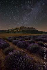 Lavenders night (Carlos J. Teruel) Tags: nikon murcia le cielo nocturnas lavanda 1835 lavenders nikon1835 xaviersam carlosjteruel d800e nikonafsnikkor1835mmf3545ged