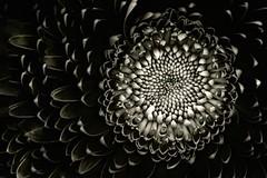 florBW1B-2265 (gycingeniero) Tags: white black flower texture nature flora expression mandala ligth ritmo rithm platinumheartaward