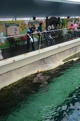 Feeding a shark - Sydney Aquarium (avlxyz) Tags: aquarium sydney australia sydneyaquarium fb5