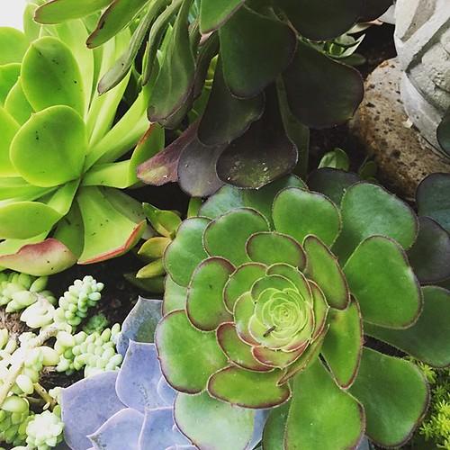 #plants #succulents