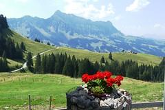 Alp Imbrig Marbach LU Aussicht Richtung Hogant (Martinus VI) Tags: schweiz switzerland suisse suiza luzern svizzera alp emmental marbach kanton entlebuch bumbach schangnau imbrig