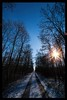 Trees and sun (ruediger59) Tags: nature forest sky blue trees sun snow