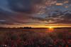 Primavera (Caramad) Tags: amapolas rojo gumieldeizan burgos castillaleón poppy puestadesol color