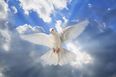 894702 (nicknickonline) Tags: horizontal ray dove sunwithclouds sunny weather perpetual white blue peace heaven everlasting eternal sunray sunlight sun sky outdoor forever day cloud bird animal air