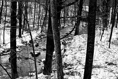 Mill Stream, B&W - Explored (RockN) Tags: millstream bw moorestatepark paxton massachusetts newengland december2015