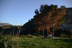 Segesta (TP) (antonella__lucchese) Tags: sunset landscape sicily segesta trapani countryside winter