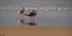 PLAYA ESTEIRO EN XOVE LUGO - GALICIA- ESPAÑA. (Caty V. mazarias antoranz) Tags: xove lugo galicia spain españa nortedeespaña cantábrico