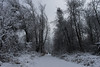 Out there (christopher.sonnleitner) Tags: allein alone winter bäume trees pfad path schnee snow kalt cold stille silence