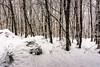 """Winter"" (allabar8769) Tags: bosque invierno kdd nieve palencia photopaisaje rutadelospantanos velilladelríocarrión árboles"