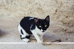 Little cat in Fez, Morocco (Naomi Rahim (thanks for 5 million visits)) Tags: cat fes fez fas morocco maroc africa northafrica travel travelphotography nikon nikond7200 2016 wanderlust pretty street streetphotography فاس المغرب kitten kitty playing