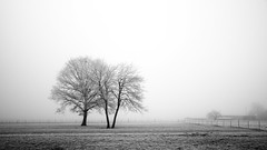 Lost (Bruno MATHIOT) Tags: arbre brouillard nature outdoor fog mist alsace dachstein france french mono monochrome tree canon 760d sigma 1770 nb bw noir et blanc