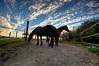horses in the sunset (Jules Marco) Tags: horses pferde sonnenuntergang sunset hdr highdynamicrange himmel sky clouds wolken koppel paddock outdoor natur nature österreich austria niederösterreich loweraustria woodquarter waldviertel canon eos600d sigma1020mmf35exdchsm wideanglelens weitwinkel tiere animal