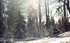 (felix.h) Tags: canoneos400d canon eos 400d digitalrebelxti eoskissdigitalx tokina5013528 tokina50135mm28 taunus taunusmountains mountains landscape nature trees snow winter white backlight backlighting hessen hesse
