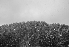 YPLEU (oscarroganjou) Tags: tourism snow forest visiting france lozere occitanie explore white black autumn tree cloud cold visit discover photography europe trip travel nature weather landscape languedocrousillon january 2017 canon eos blackandwhite