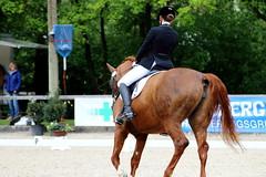 IMG_0938 (dreiwn) Tags: horse pony pferde pferd equestrian horseback reiten horseriding dressage hnger 2015 reitturnier dressur pferdekopf dressuur junioren ridingarena pferdesport doublebridle reitplatz reitverein pferdehnger kandare turnierreiten dressurprfung ldressur