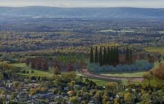 Liquidambars square. Aerial_View1