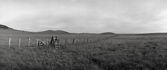 In a Field, Oregon (austin granger) Tags: ranch film field oregon stairs fence alone open farm empty trail noblex prairie passage barbwire plain zumwaltprairie austingranger