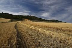 Comenzamos (anpegom) Tags: cereal valladolid verano paja lomas grano castillaylen cebada rastrojo meseta camposdecastilla recolecta villavaquern anpegom