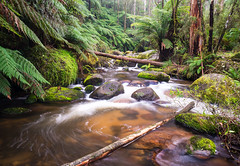 Toorongo River (laurie.g.w) Tags: west wet water creek forest river landscape moss rocks stream reserve australia victoria falls shire ferns waterscape gippsland baw toorongo