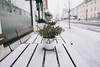 Flowers (borishots) Tags: flower flowers flora flowerpot natural naturallight nature street table woodentable snow snowing oslo norway scandinavia analog retro vintage sonya7 sonyfe28mmf2 28mm f2 wideopen wideangle