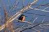 Kingfisher (siebensprung) Tags: eisvogel kingfisher alcedoatthis bird vogel wasser water animal tier wildtier wild nature natur