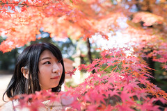 Young woman closely looking at autumn leaves (Apricot Cafe) Tags: img9485 20s asianethnicity japan japaneseethnicity sigma35mmf14dghsmart autumn autumnleaves beautyinnature change charming cheerful enjoying flare foliage freshness happiness hope japanesefallfoliage japanesemaple leaves mapleleaf morning nature oneperson onlywomen outdoors people refreshing selectivefocus sunlight tranquility traveldestinations walking woman youngadult kytoshi kytofu jp
