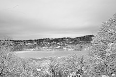 frozen Oaks Bottom (Ben McLeod) Tags: bw oaksbottom oregon portland sellwood sellwoodbluff willametteriver winterstorm birds frozen geese ice pond snow
