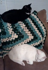 Our Two Cats Relaxing. (dccradio) Tags: lumberton nc northcarolina robesoncounty afghan crocheted blanket cat cats feline meow furry pets domesticpet animals green white tan blinds windowblinds blackwhite blackandwhite tuxedocat