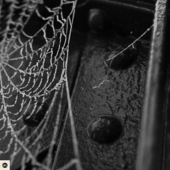 13m311216 (photo & life) Tags: montargis ville city france europe bridge blackandwhite noiretblanc toiledaraignée frosted frozen street streetphotography photography photolife™ jfl sony sonyrx1r sonydscrx1r rx1r rue zeiss carlzeisssonnar35mmf2t 35mm square squareformat squarephotography