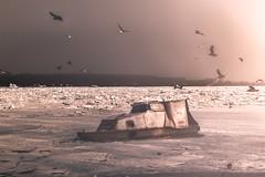 Frozen river (Master Iksi) Tags: river ice frozen sky boat danube beograd belgrade srbija serbia canon700d