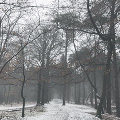 wintry walk (=Mirjam=) Tags: iphone woods zeist winter odc afternoonwalk zeisterbos hertenkamp sneeuw cold wintry sunday frosty januari 2017