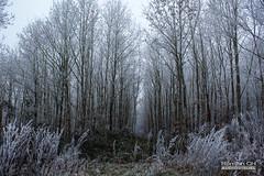Forêt Glacée (CH-Romain) Tags: hiver snow neige winter france foret arbre tree feuille nature morte brume brouillard gele chemin paysage landscape voie glace flocon