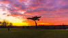 Sunset in Cassiobury Park (alalchan) Tags: sunset winter cassioburypark watford herts uk weather pink purple
