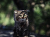 Street cat 176 (Yalitas) Tags: cat cats кот кошка котка kedi chat feline kat katze katzen kot kotka pet felino kottur katte kass kitty gato kocka gatta katzchen sleepingcat canon