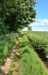 25730 (benbobjr) Tags: lincoln lincolnshire midlands eastmidlands england english uk unitedkingdom gb greatbritain britain british westlindsey nettleham path pathway footpath publicfootpath bridleway thedales parkside greenfields